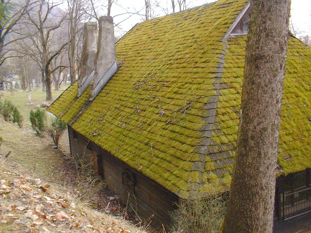 How to Get Rid of Roof Moss